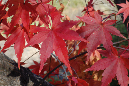 fall_2.jpg