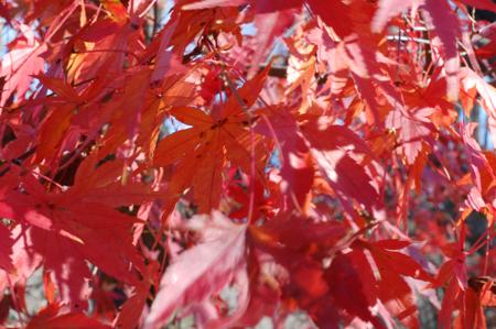 fall_3.jpg