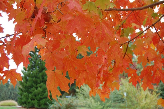 leaves_2