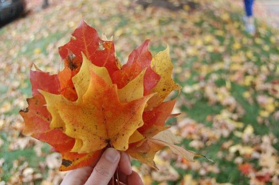 leaves_6