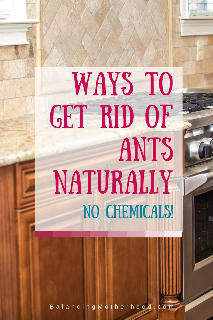 how to kill ants in lawn without chemicals